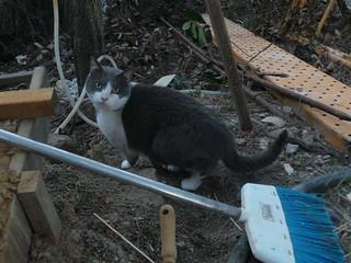 Pet cat of Spanish vets   by Rayya The Vet