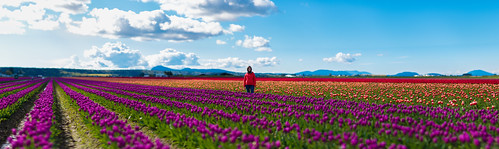 family flowers red people panorama orange plants nature colors field washington spring girlfriend seasons purple unitedstates tulips bokeh events 85mm noflash april northamerica skagit mountvernon locations skagitvalley locale tulipfields manualmode iso50 85mmf14 2013 geo:state=washington exif:focal_length=85mm exif:iso_speed=50 haleymontgomery hasmetastyletag hascameratype naturallocale haslenstype camera:make=nikoncorporation brenizermethod selfrating5stars exif:make=nikoncorporation exif:lens=850mmf14 geo:countrys=unitedstates exif:aperture=ƒ14 assortedevents subjectdistanceunknown geo:city=mountvernon afsnikkor85mmf14g 13200secatf14 nikond800e exif:model=nikond800e camera:model=nikond800e april142013 skagitvalleytulipfestival04152013 geo:lon=1224468798 geo:lat=484232424 48°2524n122°2649w mountvernonwashingtonunitedstates