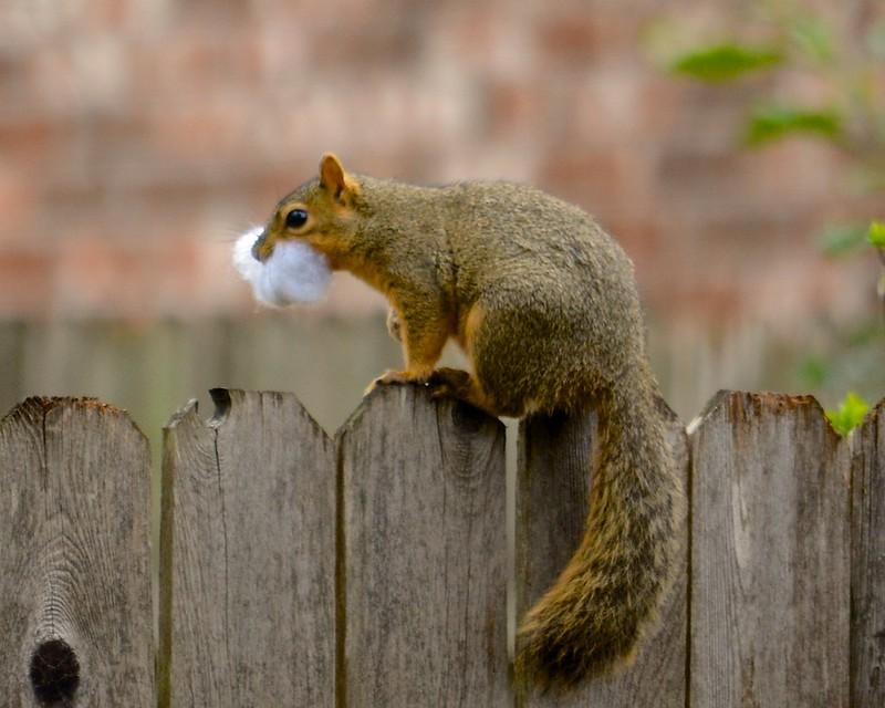 Santa Squirrel (explored)
