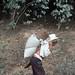 Cargando café al pueblo - carrying coffee to town; entre San Juan Tabaá y Villa Alta, Región Sierra Juárez, Oaxaca, Mexico por Lon&Queta
