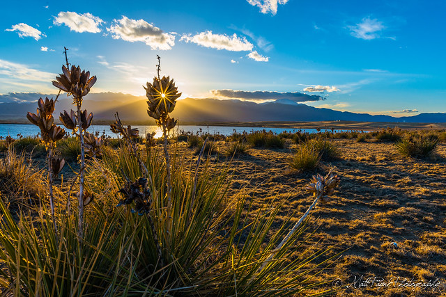 Yucca Flare - Explored #39