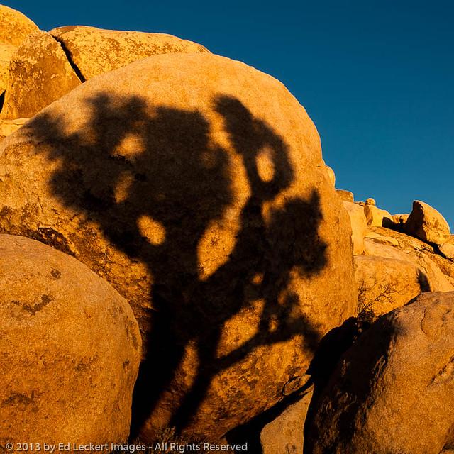 Rock Art, Joshua Tree National Park, California