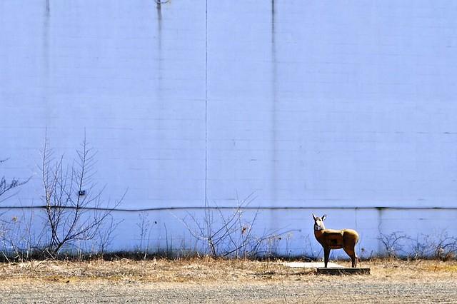 That Deer Won't Run