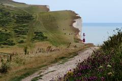 IMG_7639 - Beachy Head - East Sussex - 14.08.16