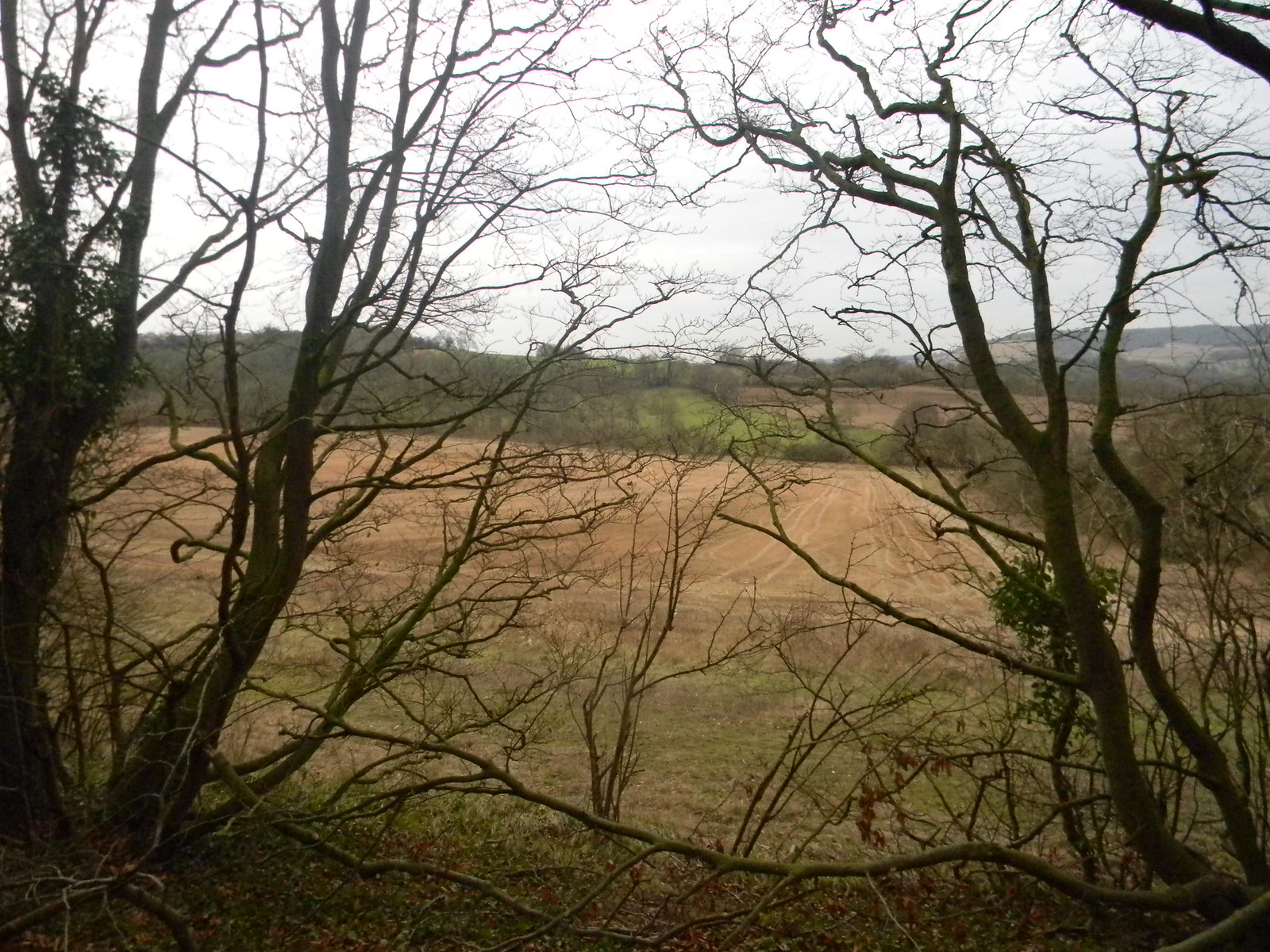 Fields Chilham Circular