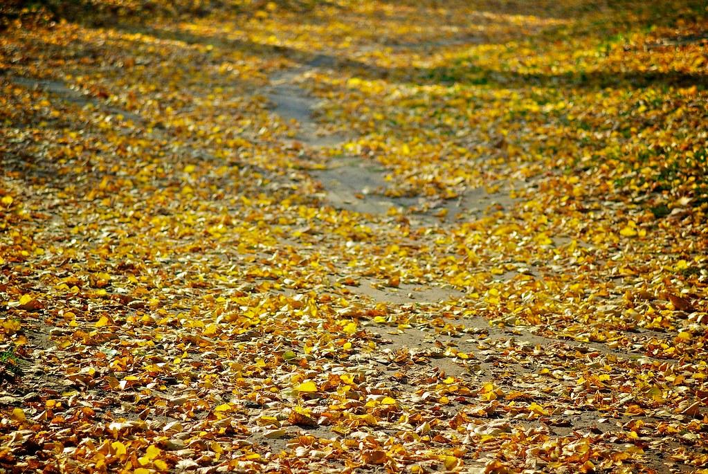 296/366: Golden path