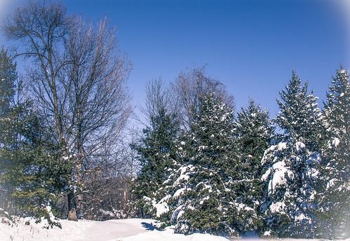 new york trees winter usa snow landscape state evergreens treescape hudsonrivervalley snowscape autofocus mygearandme 845areacode ringexcellence flickrstruereflection1 rememberthatmomentlevel1