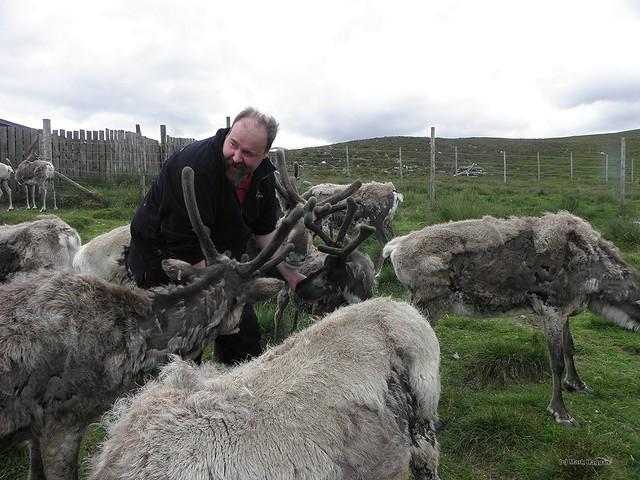 Herding Reindeer