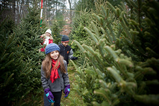 Christmas Tree Farm, Deerfield | by Massachusetts Office of Travel & Tourism