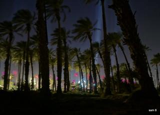 Palms near Coachella | by photosam88