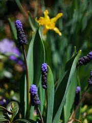 土, 2013-04-06 12:19 - ブルックリン植物園