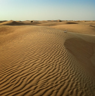 The desert flora | by Tigra K