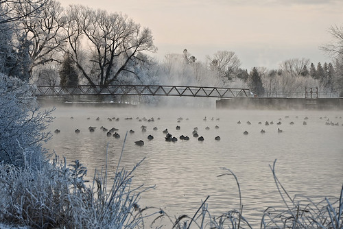 morning trees winter mist snow ontario canada nature water sunrise river landscape nikon guelph canadageese riversidepark speedriver