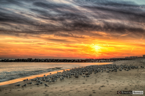 ocean new york sunset sky sun seagulls newyork beach water birds rock clouds sand nikon rocks waves jetty ahmed rockaway d90 towfiq
