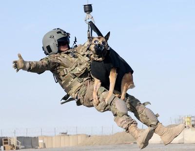 Dog hoist