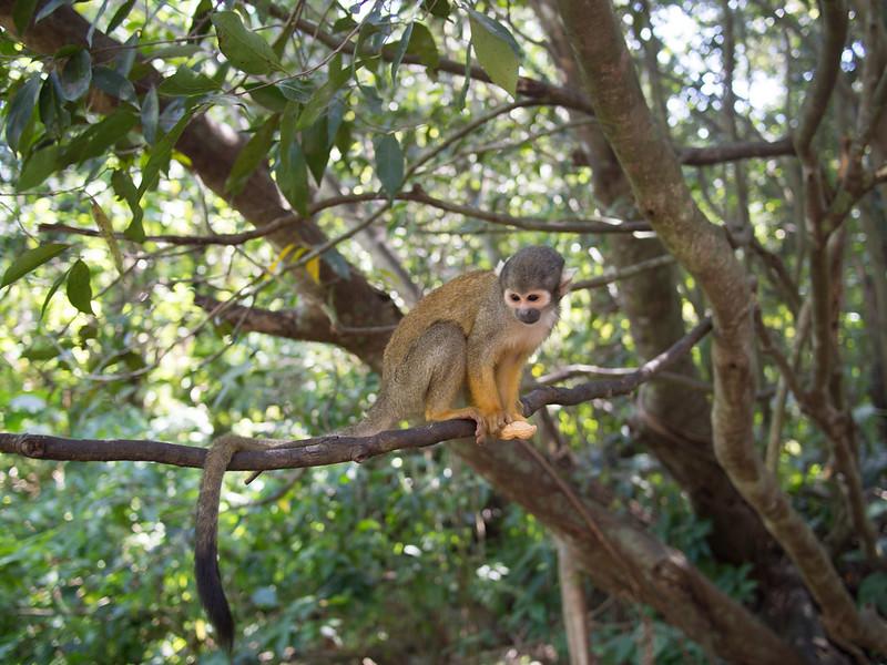 Selva de monos, Miami