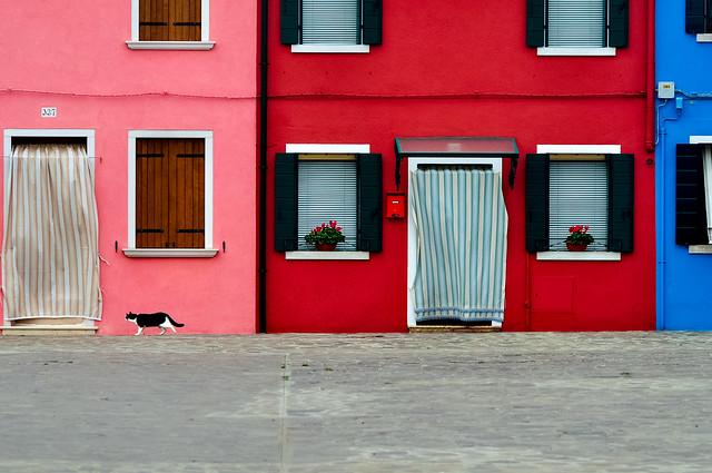 Burano Colors & Cat
