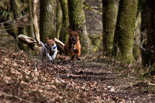 Terrier Racing | by me'nthedogs