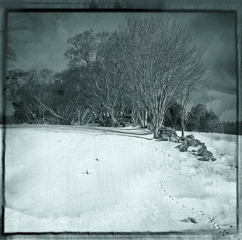 Spor i snø