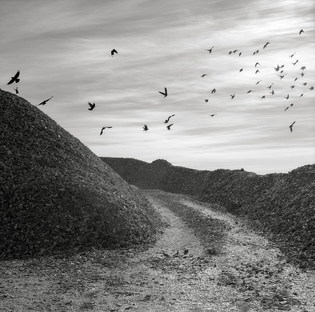 Birds and Shells, Nahcotta, Washington