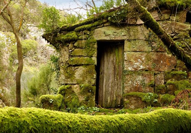 Un viejo molino