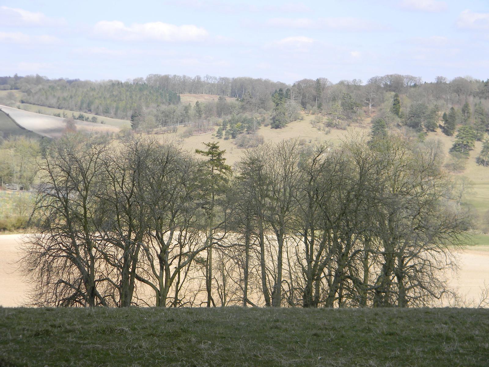 Trees Henley via Stonor (Stonor Shortcut)