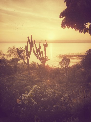 africa sunset cactus sun lake reflections retro ethiopia awassa snnp nexus4 hawassa haileresort snapseed flickrandroidapp:filter=none