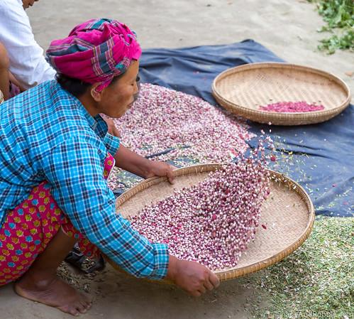 Myanmar-20180323-1190 | by ShaneAndRobbie