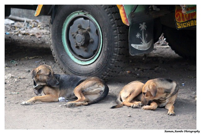 Gudi Padwa Celebration 2018 - Twin dogs