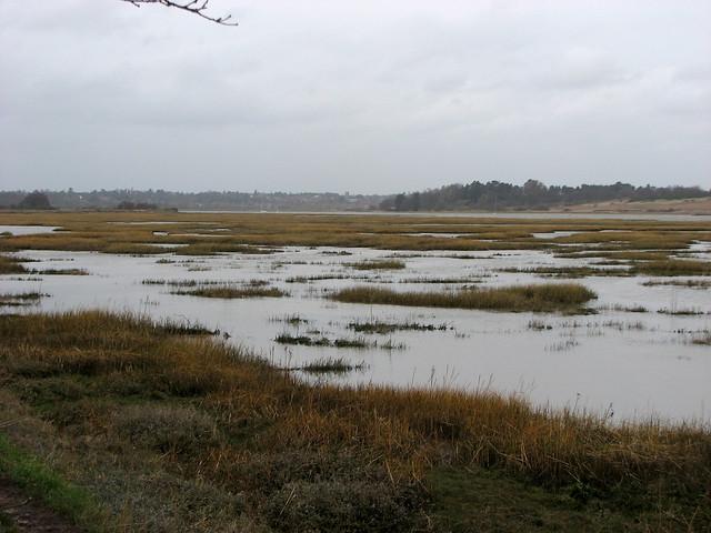 Marshes near Waldringfield