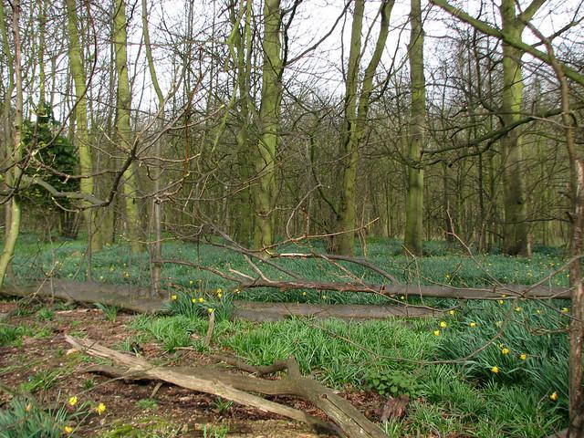 Lumber Wood, Martlesham