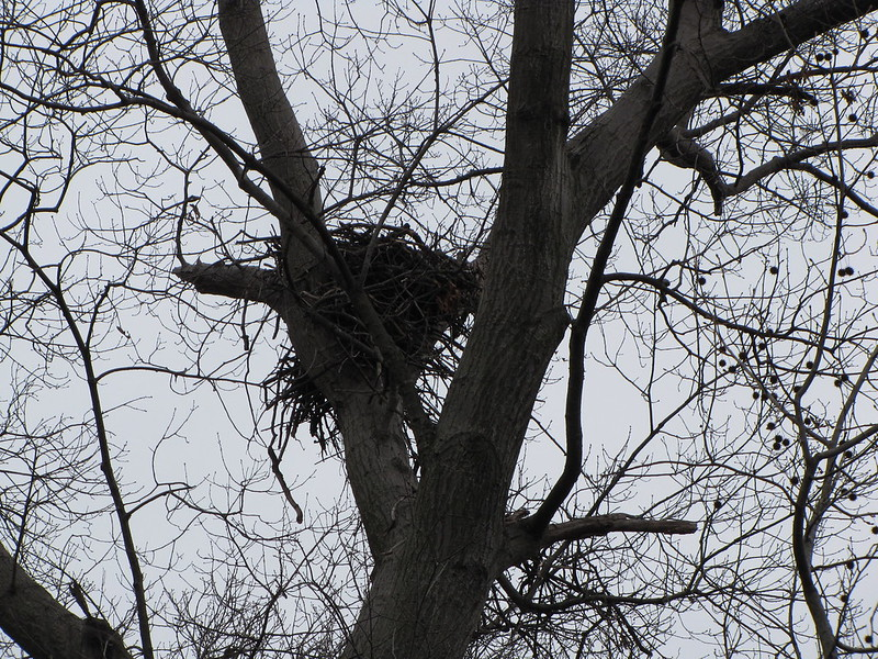 Morningside Nest