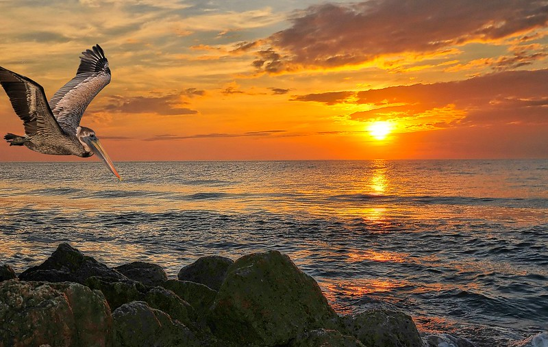 Florida Sunset With Pelican