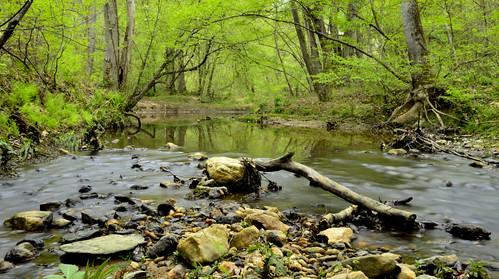 trees green nature water creek georgia landscape stream wolfcreek vigilantphotographersunite vpu2