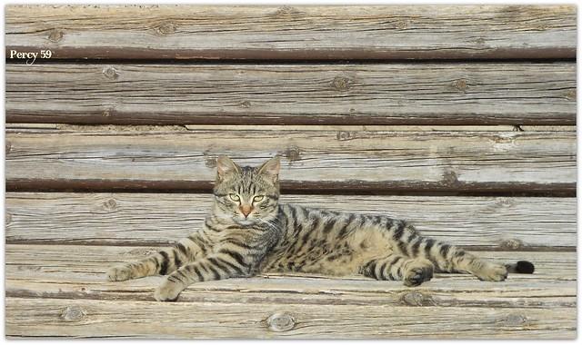 Gattino sulla panchina