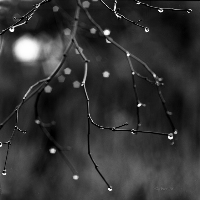 twinkling raindrops on a winter day