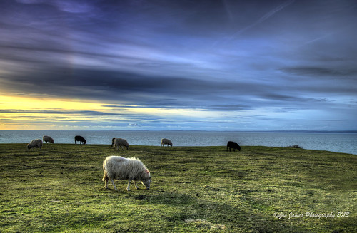 sunset sea sky beach grass animals swansea wales clouds nikon colours sheep gower welsh colourful rhossili sigma1770 d7000