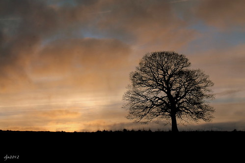 tree silhouette evening warm lonetree wipeoutdave canoneos1100d djs2012