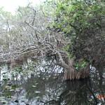 Miami, Everglades 02