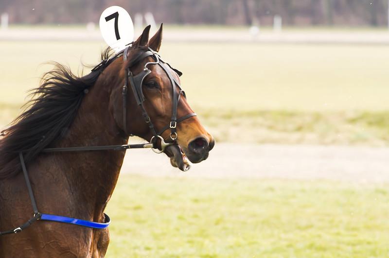 Horse Races_002