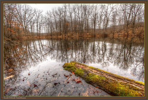 statepark park lake reflection tree green nature water mi forest photoshop canon scott eos moss spring log woods state michigan gray bracket holly 7d area wetlands recreation baretrees hdr wetland treereflection smithson stateparks waitingforspring photomatix michiganstateparks michiganwinter michiganwoods reflectionoftreesinwater michigannature michiganwetlands hollystaterecreationarea eos7d puremichigan hollystatepark bareforest dtwpuck scottsmithson scottelliottsmithson