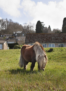 Shetland pony enjoying the sun | by Helen in Wales