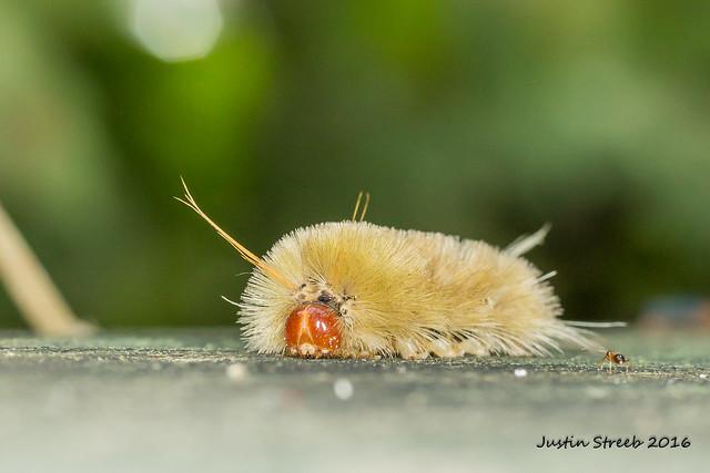 Caterpillar & Ant_