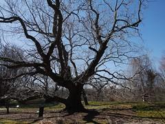 土, 2013-03-30 11:04 - ブルックリン植物園