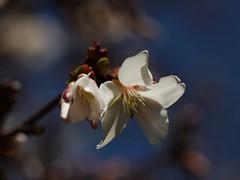 土, 2013-04-06 12:13 - ブルックリン植物園