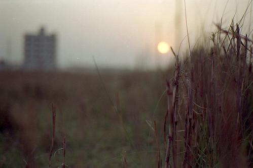 sunset film grass evening nikon bokeh dhaka nikkor bangladesh nikonf6 af50mmf18d fujicolorc200 dhakadivision epsonv330 sheikhshahriarahmed
