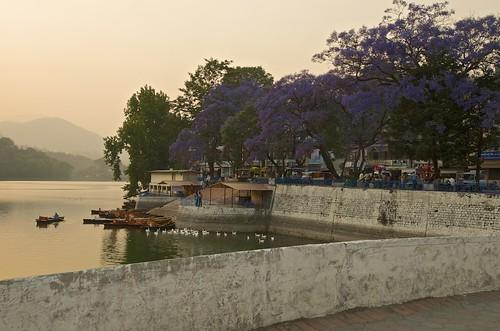 sunset india lake tree holidays purple hill jacaranda vacations kumaon bhimtal uttarakhand jacarandatrees