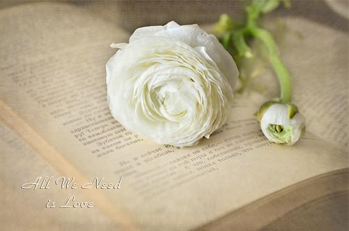 White | by Zosimidou