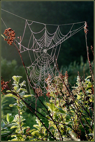 life nature death spider seasons birth spiderweb comingfullcircle