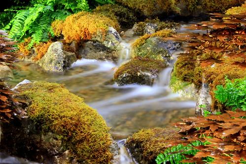 toronto ontario canada spring springcolors directenergy coloursofthisspring